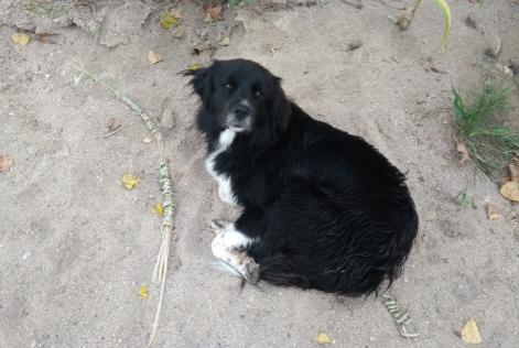 Discovery alert Dog miscegenation Male , Between 7 and 9 months Clisson Spain
