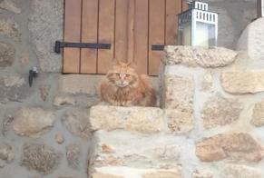 Disappearance alert Cat  Female , 12 years Pego Spain