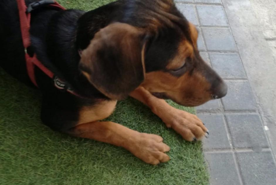 Discovery alert Dog miscegenation Male , Between 4 and 6 months Madrid Spain