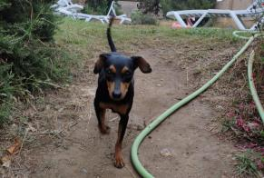Discovery alert Dog miscegenation Female , 3 years Vilamacolum Spain