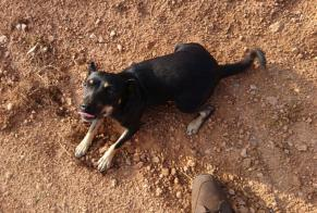 Discovery alert Dog Female Murcie Spain