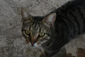 Discovery alert Cat Female , 2 years Xàbia / Jávea Spain