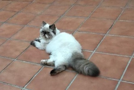 Disappearance alert Cat  Female , 1 years Málaga Spain