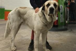 Discovery alert Dog  Male Antequera Spain